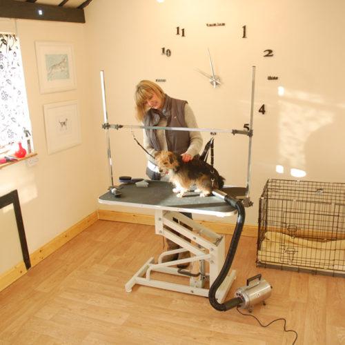 grooming-salon1